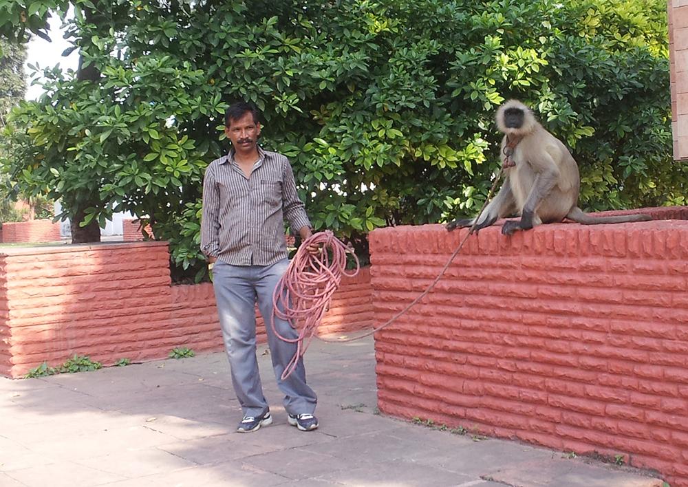Guard Monkey